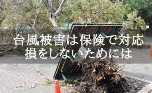 台風の被害で倒れた大きな木の写真