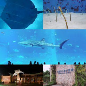 美ら海水族館のジンベイザメやマンタなどの写真