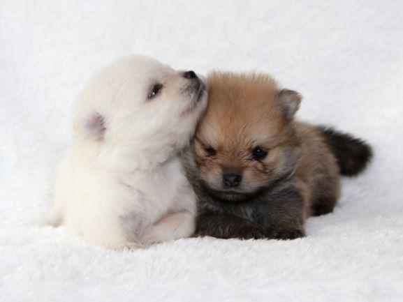 マンション ペット 飼育 犬