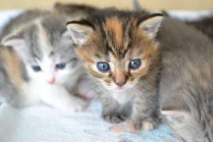 マンションで飼育するかわいい猫の写真