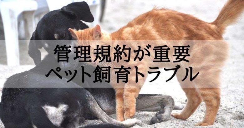 ペット(犬と猫)が仲良くじゃれ合う様子