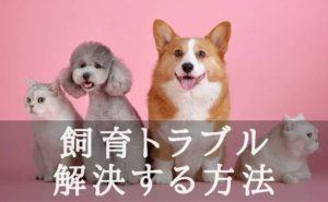 かわいい犬と猫が写った写真