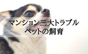 ペット飼育がマンションの三大トラブルになっていることを心配する犬(チワワ)