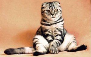 ペット飼育のトラブルを残念がる猫